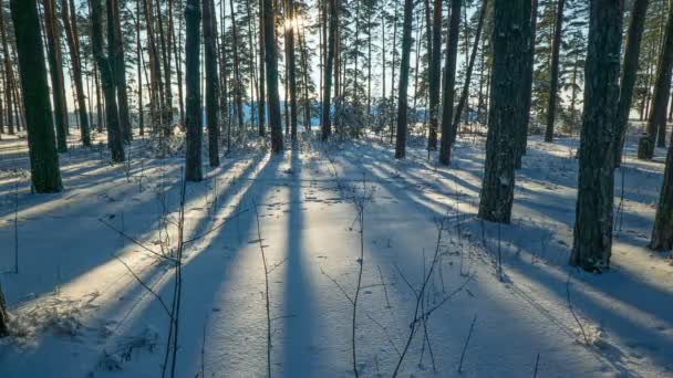Movement of sun and shadows in winter forest.