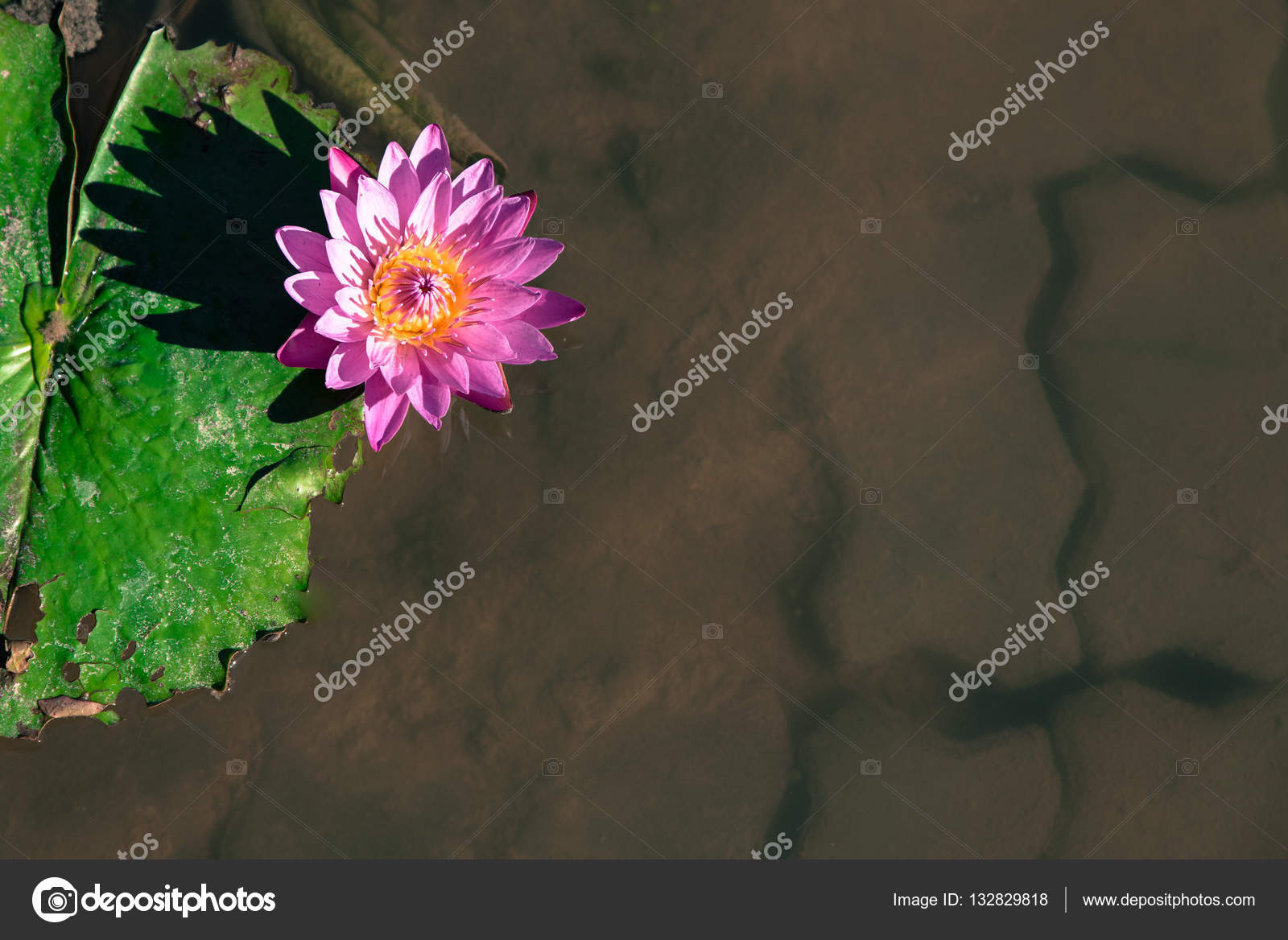 Beautiful light purple lotus flower with leaves in pool on dark beautiful light purple lotus flower with leaves in pool on dark light and vintage tone with copy space photo by theerapong28 mightylinksfo