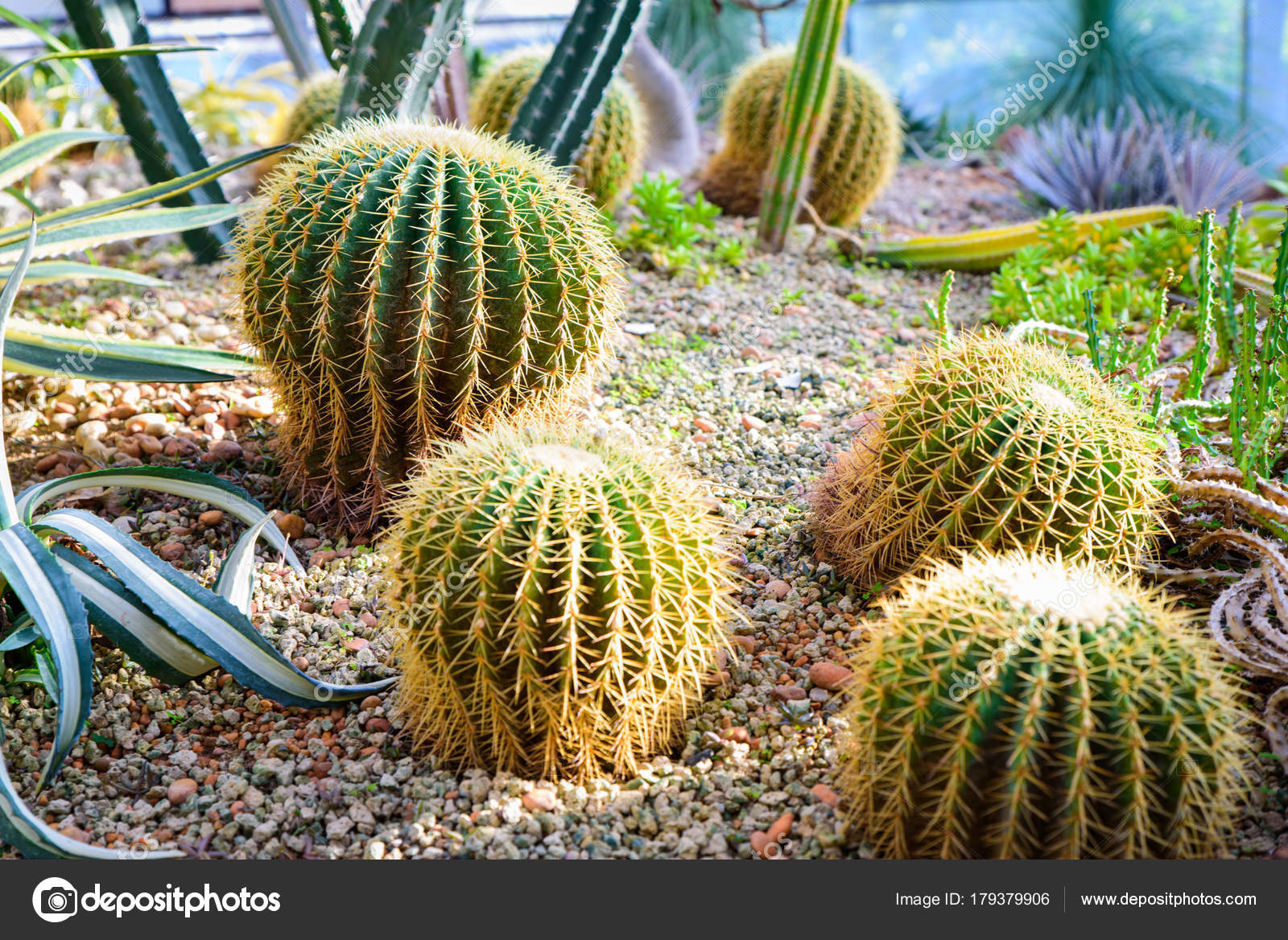Foto de cactus y suculentas con diferentes tipos de jardín — Foto de ...