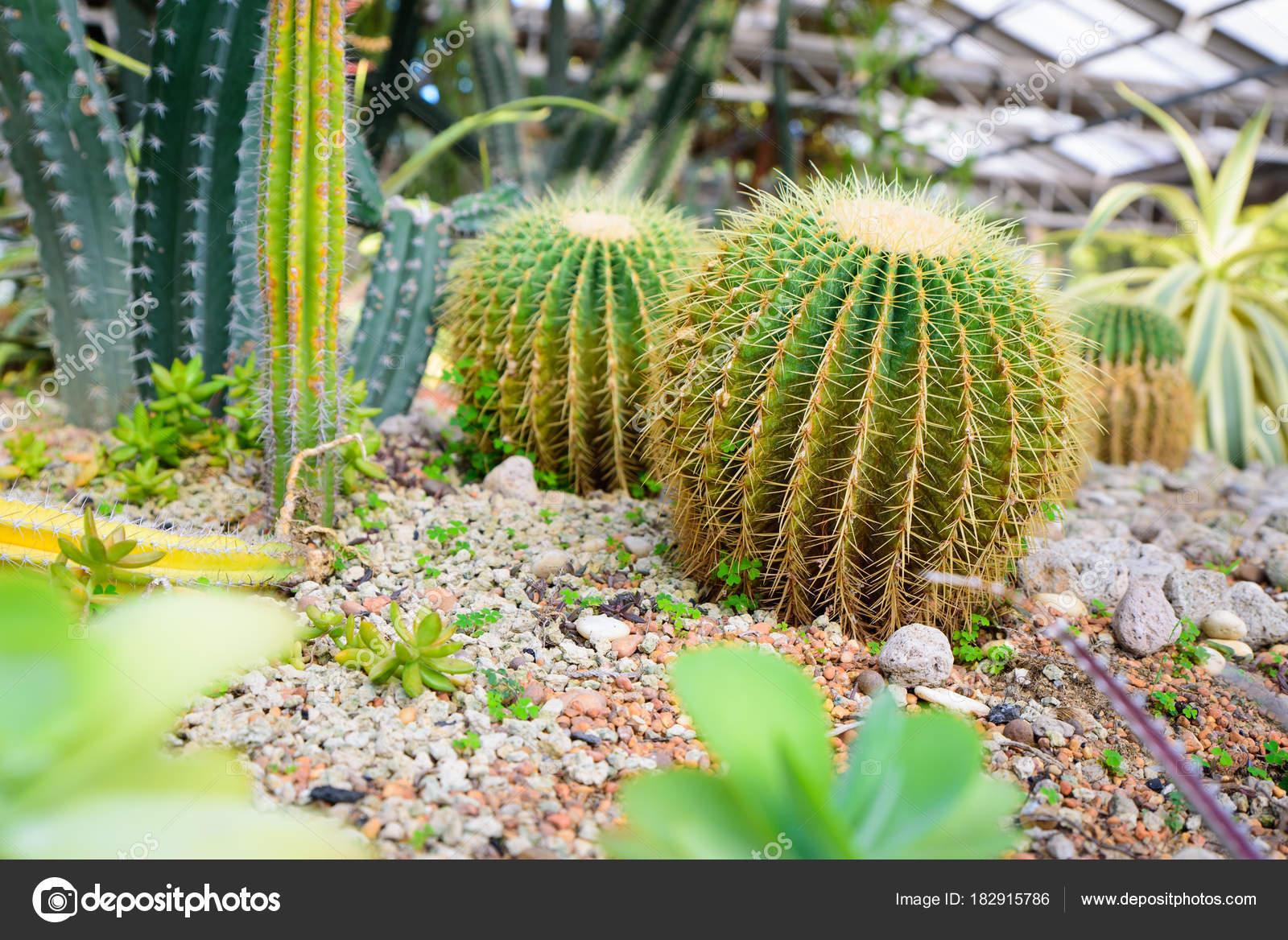 Foto de cactus y suculentas con diferentes tipos de jardín — Fotos ...