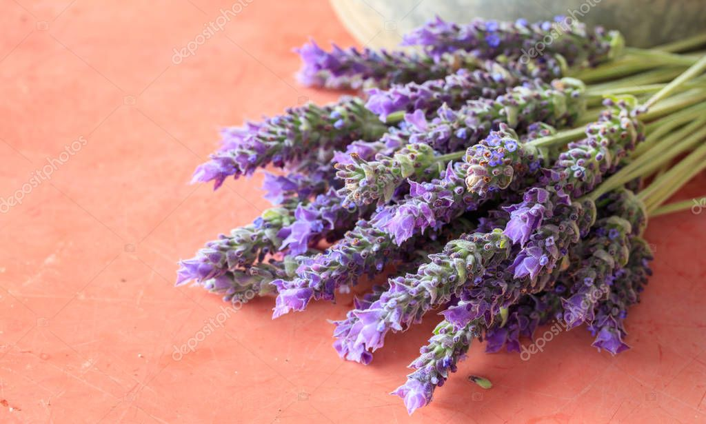 Lavender flowers on red background