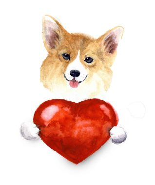 Watercolor cute lover valentine havanese puppy dog is holding a red heart, isolated on white background. Happy Valentin'es day.Illustration for greeting card, poster, banner