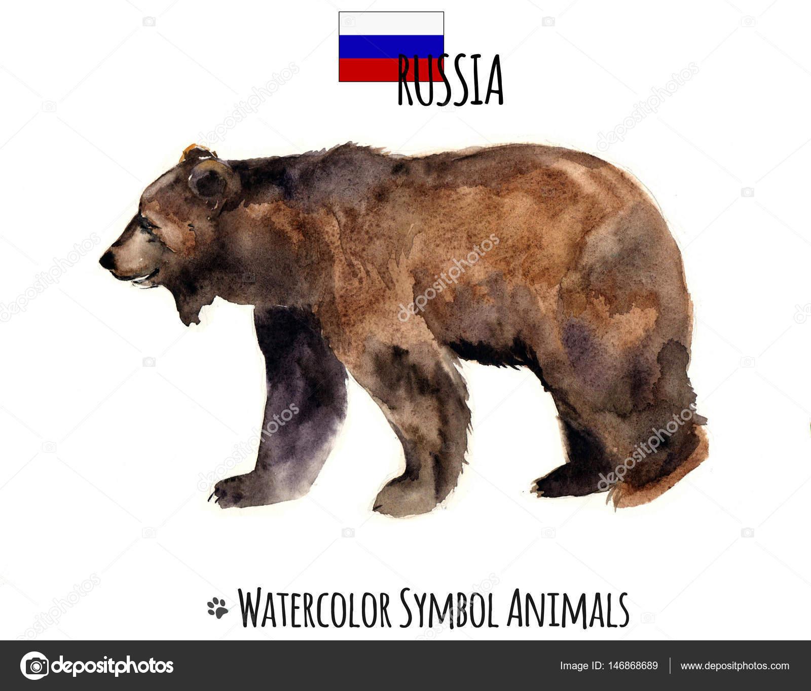 水彩動物。ペットのイラスト。かわいい野生のクマ。水彩のロシアの