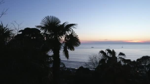 Noční moře pánev s palmami