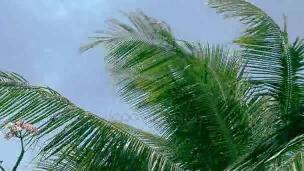 Close up palm tree leafs blowing in the wind. HD
