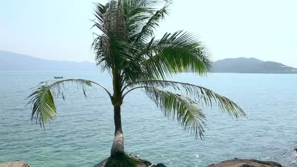 Lonely palm in front and sea horizon with islands at background.