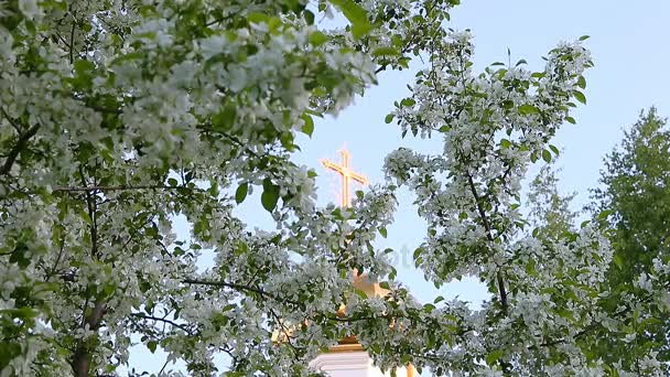 Focus movement from golden cross of church dome to white flowers of blossom apple-tree branches