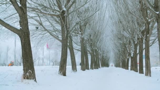 Panning shot of beautiful winter alley with snow-covered trees