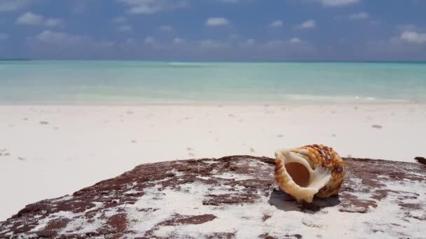 Mořská mušle na tropické pláži. Cestování na Bora Bora, Francouzská Polynésie.