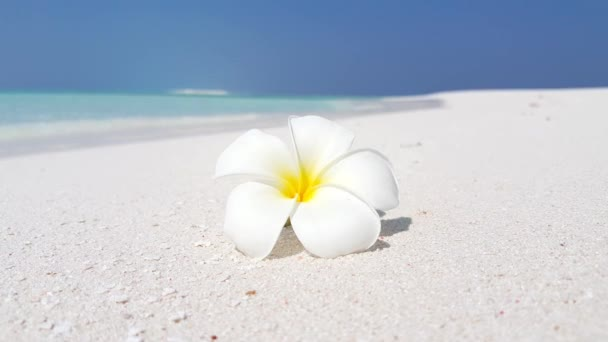 Frangipani flower on the beach. Summer journey to Thailand.