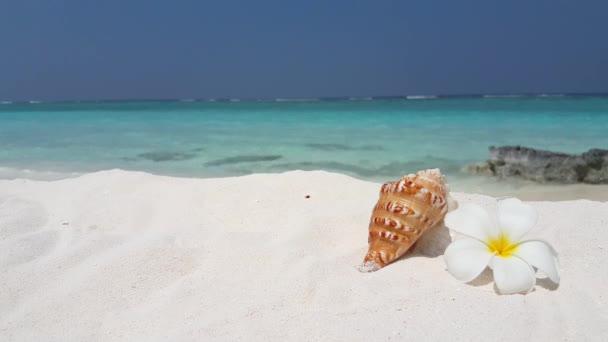 Malá mušle s kyticí na pláži. Námořní scéna na Bali.