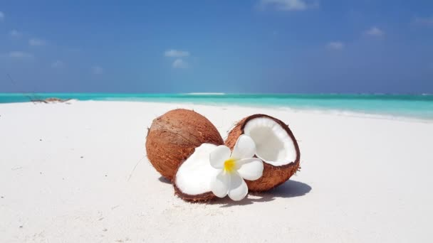 Ripe coconuts with plumeria flower on the coast. Enjoying tropical vacation at Bali, Indonesia.