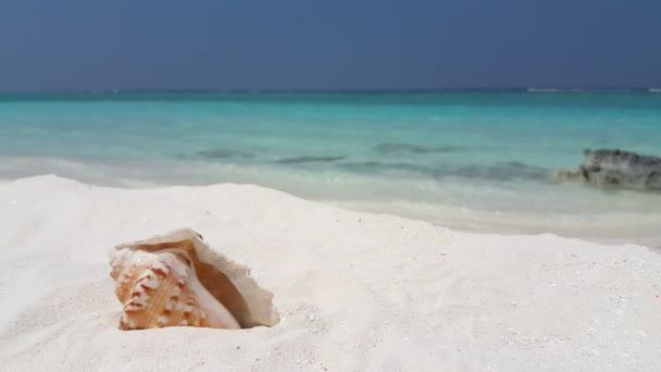 Seashell na čistém bílém písku. Letní scéna na Maledivách, jižní Asie.
