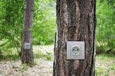 Elektromos aljzat a fák az erdő