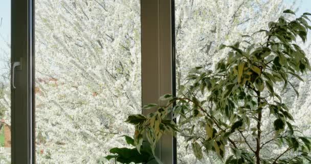 Pohled z okna na stromě 4k