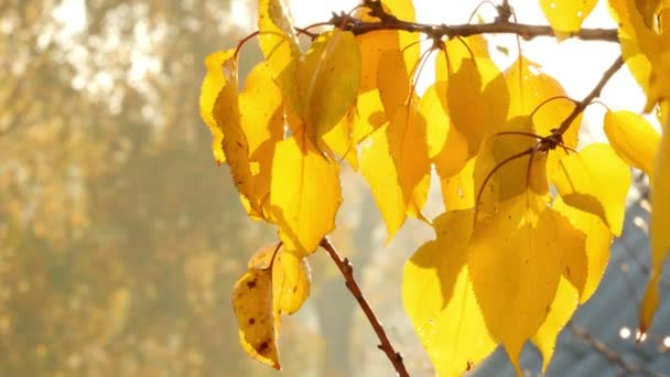 Autumn Tree Branch With Yellow Leaves