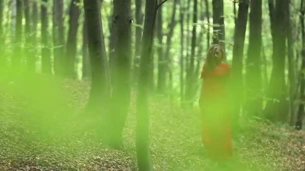 Csinos nő tárja gyönyörű erdők