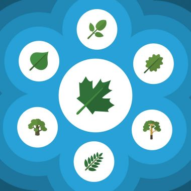 Flat Icon Natural Set Of Alder, Hickory, Acacia Leaf And Other Vector Objects. Also Includes Tree, Oak, Leaf Elements.