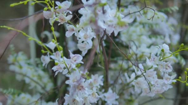 Krásné svatební oblouk pro manželství s bílými květy