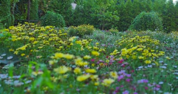 A mező a színes virágzó vad tavaszi virágok