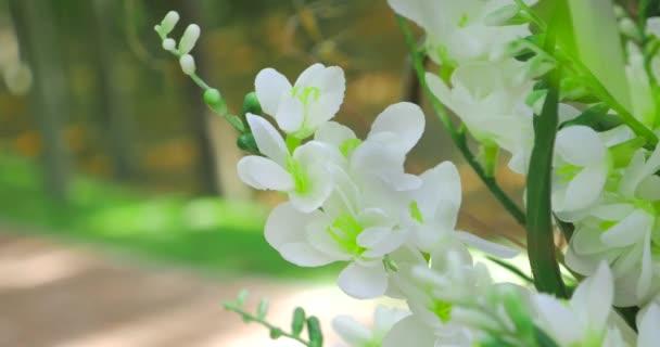 Kvetoucí květiny na jaře