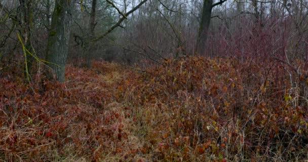 podzimní krajina v deštném pralese