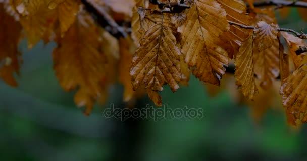 őszi levelek, esős, kép, eső, eső, levelek, gyönyörű, őszi, aranyos, sárga, száraz, barna, fa, hosszú, csodálatos, természet, erdő, park, mint a fák, csepp eső,