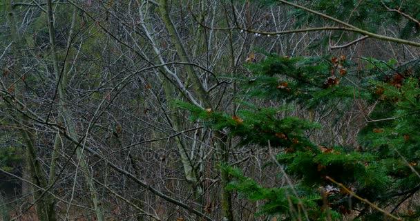 silné větve v lese, pozadí přírody, přírodní