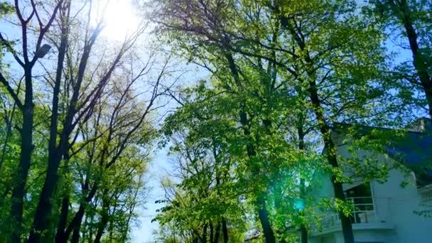 krásný zelený dvůr se stromy kolem domu