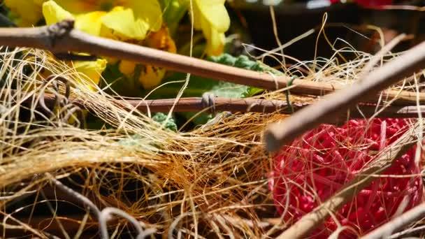 žluté a červené květy v seně a větve