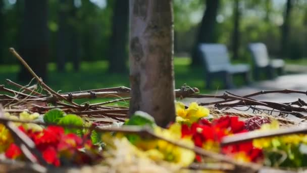 červené a žluté květy kolem closeup kmen stromu s lavičkami v uličce