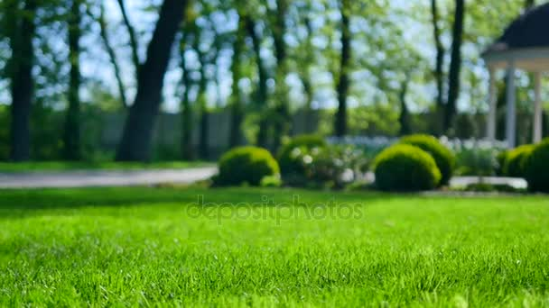 schöner Garten mit grünem Gras und Gebüsch