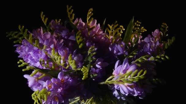 Fialová, květu otřepané akcií nebo Matthiola šedý Figaro levandule kvete ve váze na černém pozadí