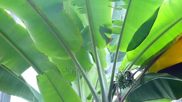 Trópusi zöld háttér. Levél botanikus kert