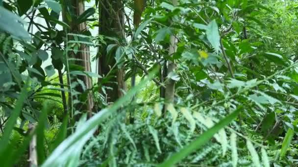 Sfondo foglie tropicali. Giardino botanico foglia