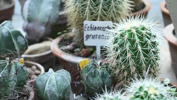 Malé dekorace kaktus v botanické zahradě