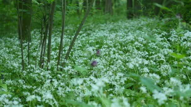 Krásná louka pole s divokými květy. Jarní kvítí closeup