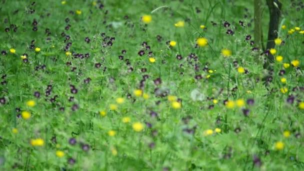 Krásná louka pole s divokými květy. Jarní kvítí