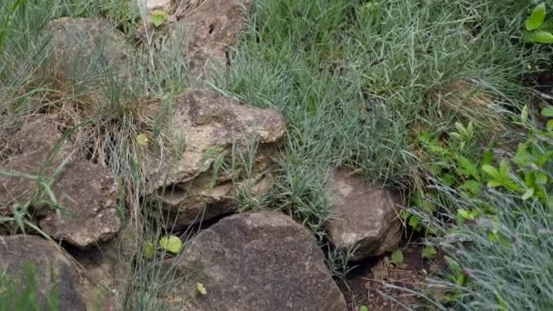 velké kameny kameny v trávě a květiny