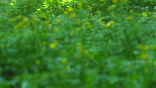 Letní pozadí. Květiny. Jaro na pozadí. Přírodní pozadí. Žluté květy. Selektivní fokus