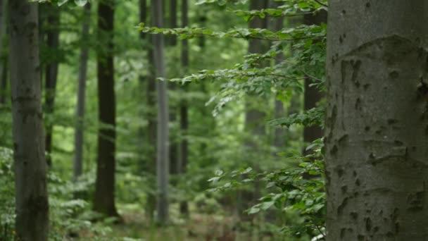 Waldbäume. Natur grünes Holz Sonnenlicht Hintergründe. Selektiver Fokus