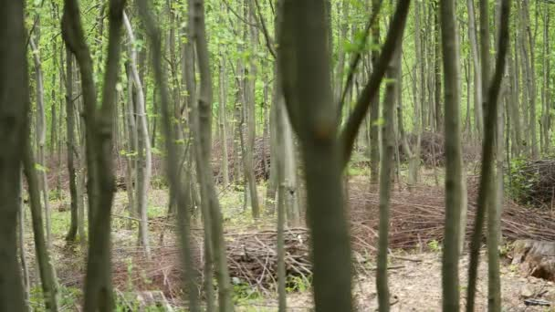 woods forest. trees background. green nature landscape. wilderness