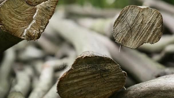 Zásobník protokolů nasekané stromy. Detailní záběr