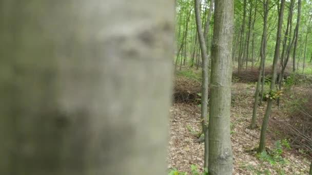Az ember egy fejszével a erdő háttér