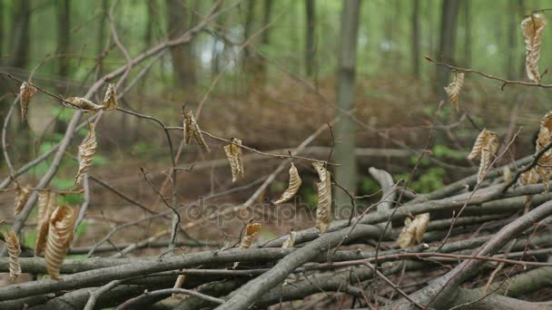 Stapel von Baumstämmen gehäckselt Bäume. Nahaufnahme