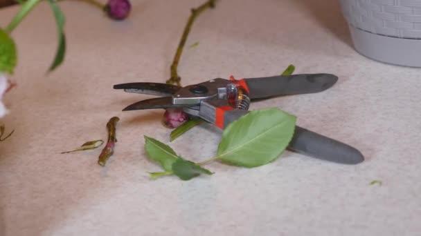 Zahradní nůžky a pořezané větve hlohu