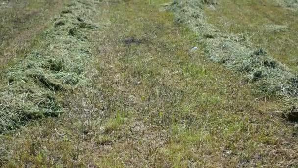 Pokosená tráva na kopci