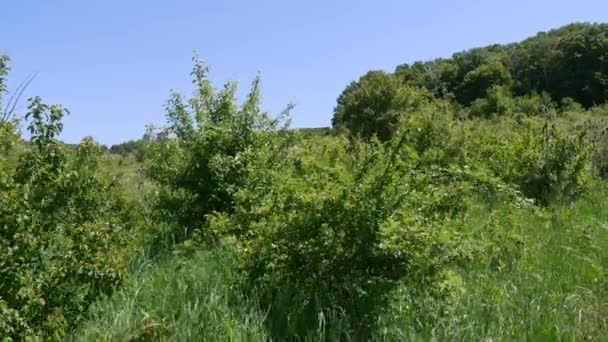 Green bushes in the field