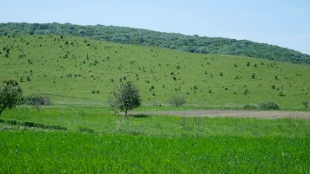 Zelené kopce s lesy a stromy