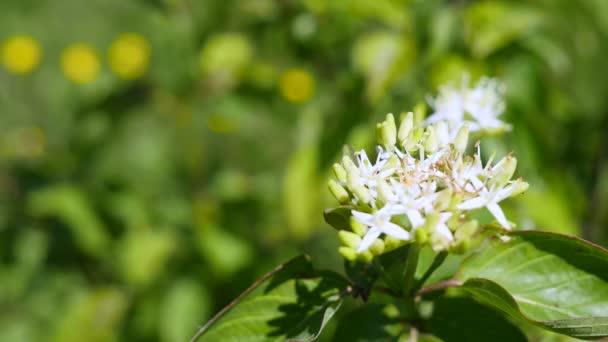 Fehér virágok virágzó zöld levelek